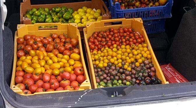 Das Tomaten Projekt